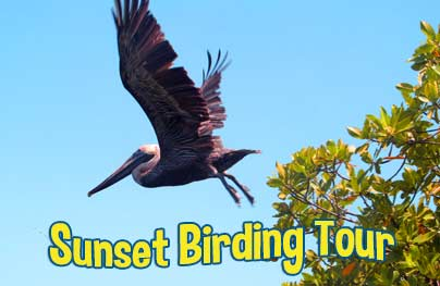 Bird Island at Sunset by Kayak in Mangrove Lagoon
